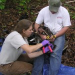 Banding eaglets. Picture compliments of CCB.