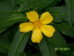 SIU, Aug, 2011 059